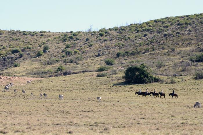 horse-safari-plett-game-reserve