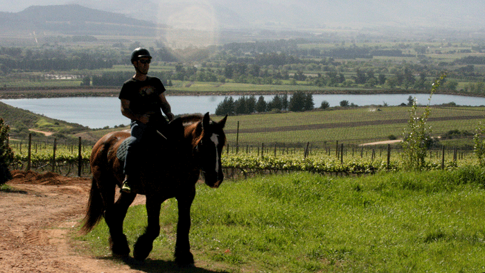 cape-winelands-horseriding-5-star-stories