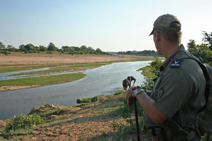 crocodile-river-elephant-walking-safari