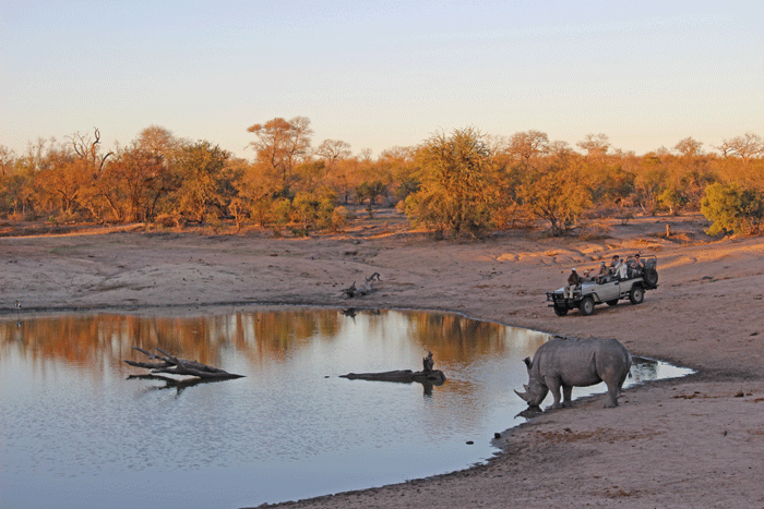 kruger-national-park-5-star-stories