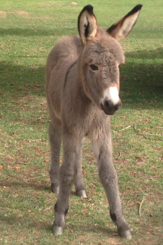 greyton-5-star-stories-baby-donkey