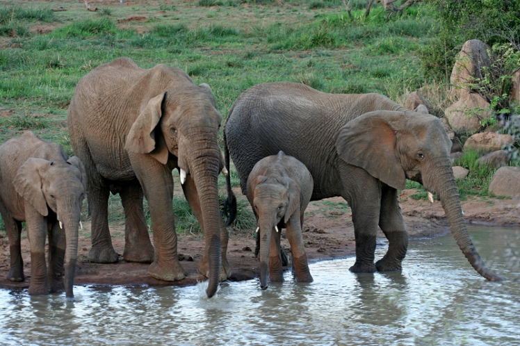 elephants-pilanesberg-5-star-stories