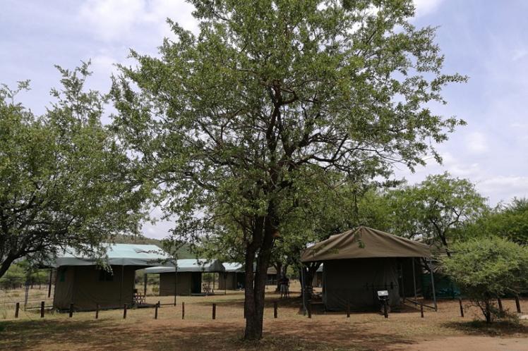 manyane-pilanesberg-5-star-stories